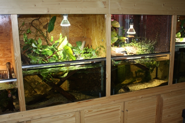 Aquarium haltung kosten community mein aquarium aqua you for Kampffisch zucht